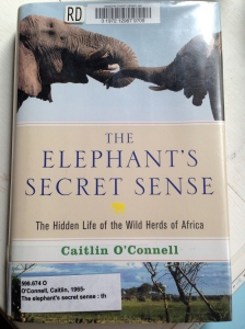 The Elephant's Secret Sense by Caitlin O'Conell